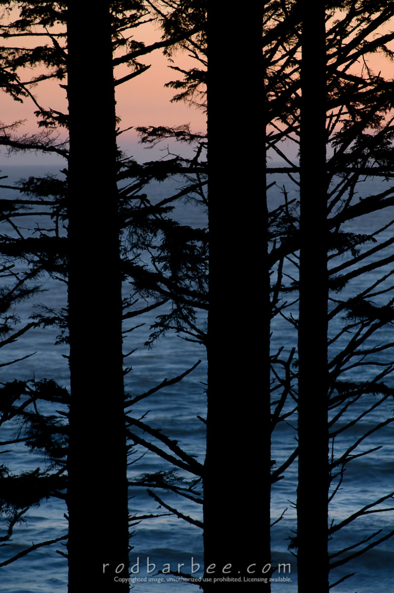 Barbee_080627_3_7728 |  Looking through silhouettes of Sitka spruce trunks toward the water at Ruby Beach after sunset.