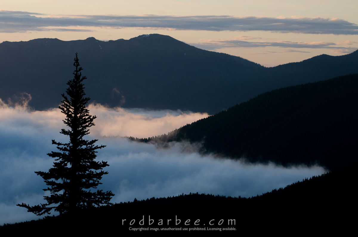 Barbee_110715_3_7797 |  Tree silhouettes, clouds and ridges, sunrise along the Hurricane Ridge Road, Olympic National Park, WA