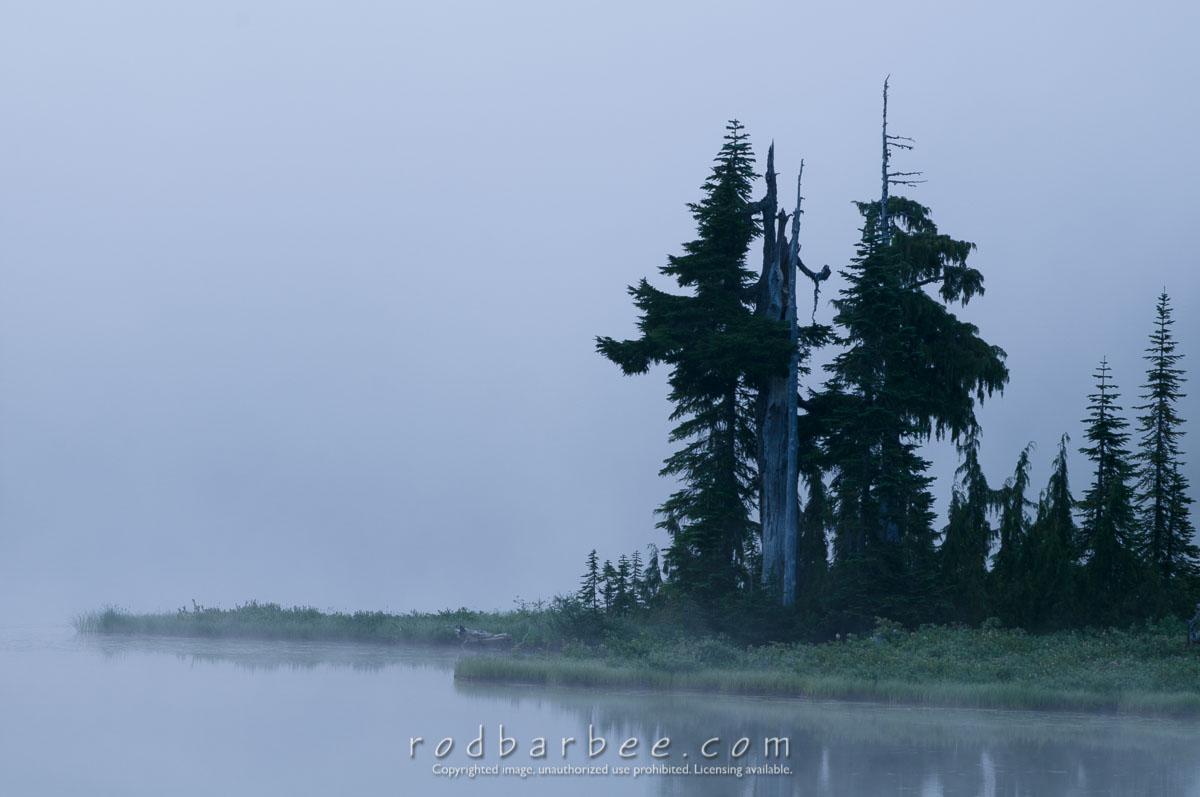Barbee_090806_3_2013 |  Trees in the fog, early morning on Reflection Lake