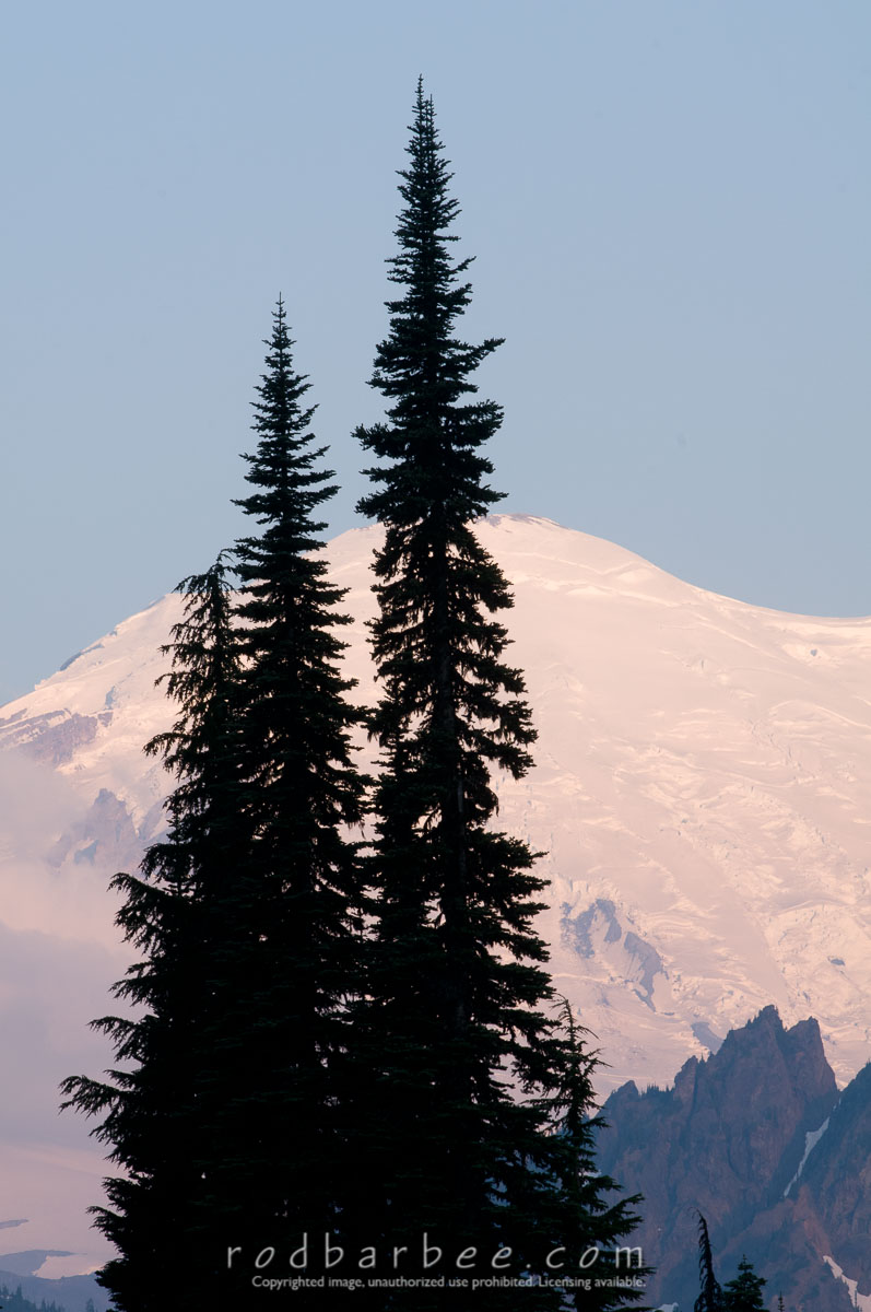 Barbee_100804_3_5203 |  Trees silhouetted agains Mt. Rainier, early morning