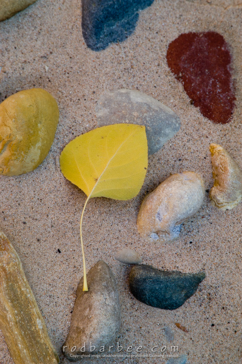 Barbee_051104_1_7617 |  Leaf and rocks in the sand along the Virgin River