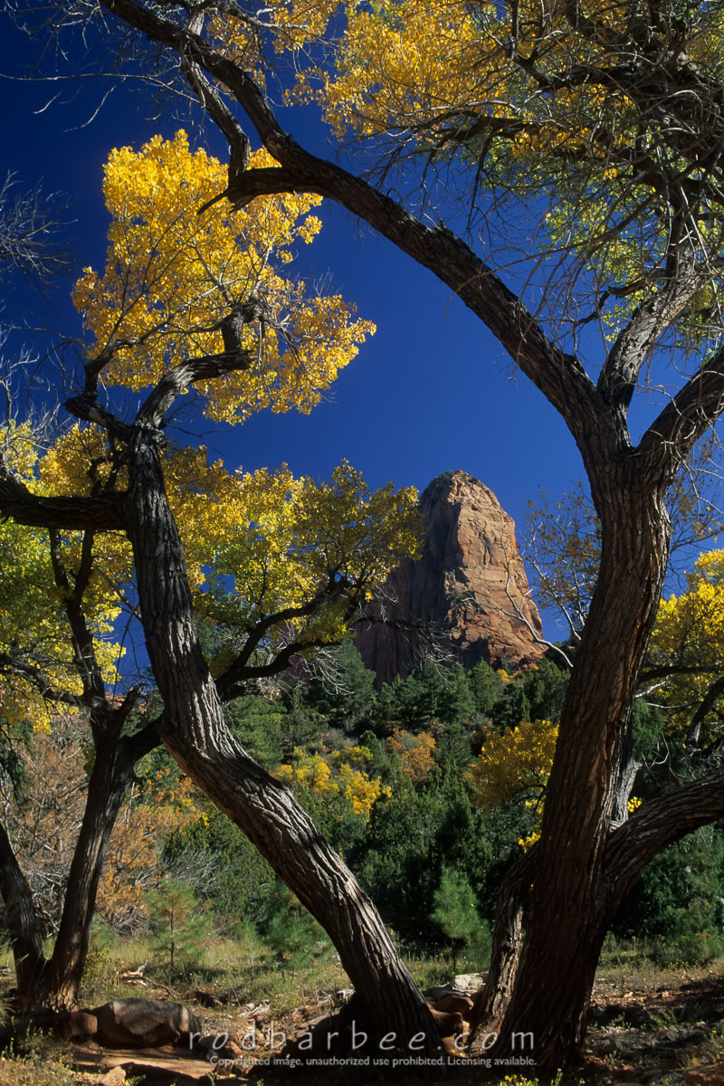 Barbee_11071 |  Along the Taylor Creek Trail in the Kolob Canyons area of Zion National Park