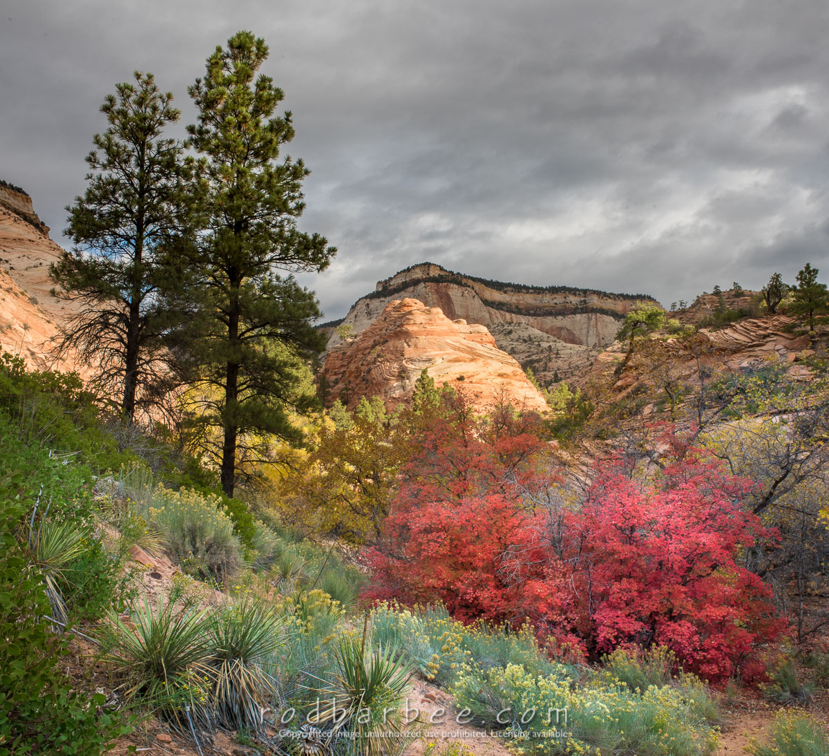 Barbee_161029_9628 |  Fall color in Zion National Park, UT