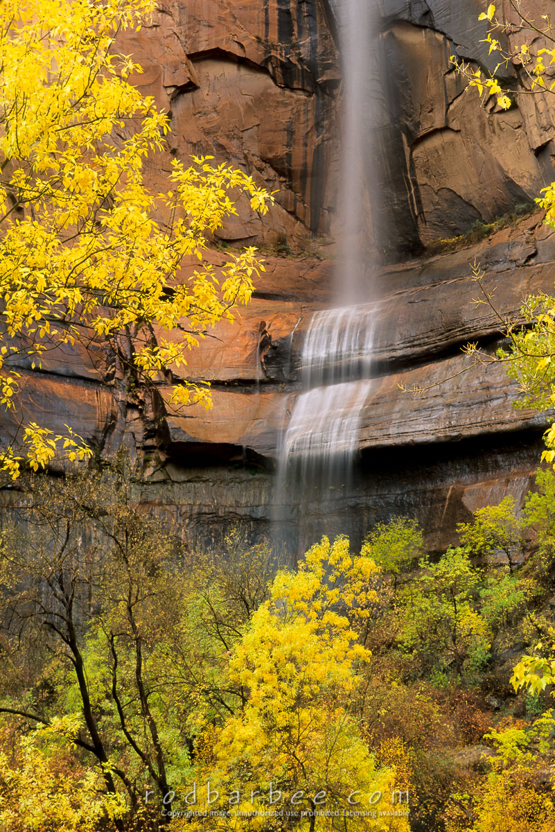 barbee_12039 |  Waterfall and fall color in the Temple of Sinewava, Zion National Park, UT. Heavy rain causes waterfalls throughout the canyon.