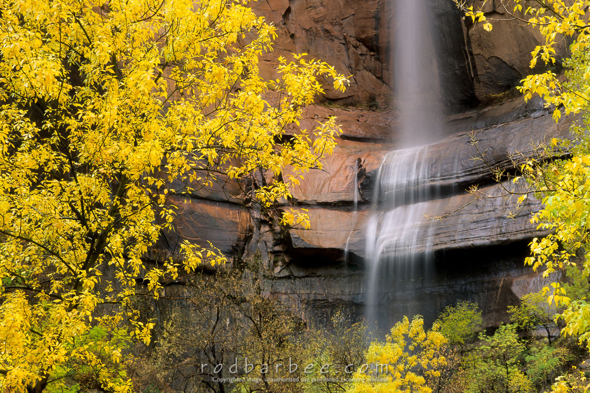 barbee_12047 |  Waterfall and fall color in the Temple of Sinewava, Zion National Park, UT. Heavy rain causes waterfalls throughout the canyon.