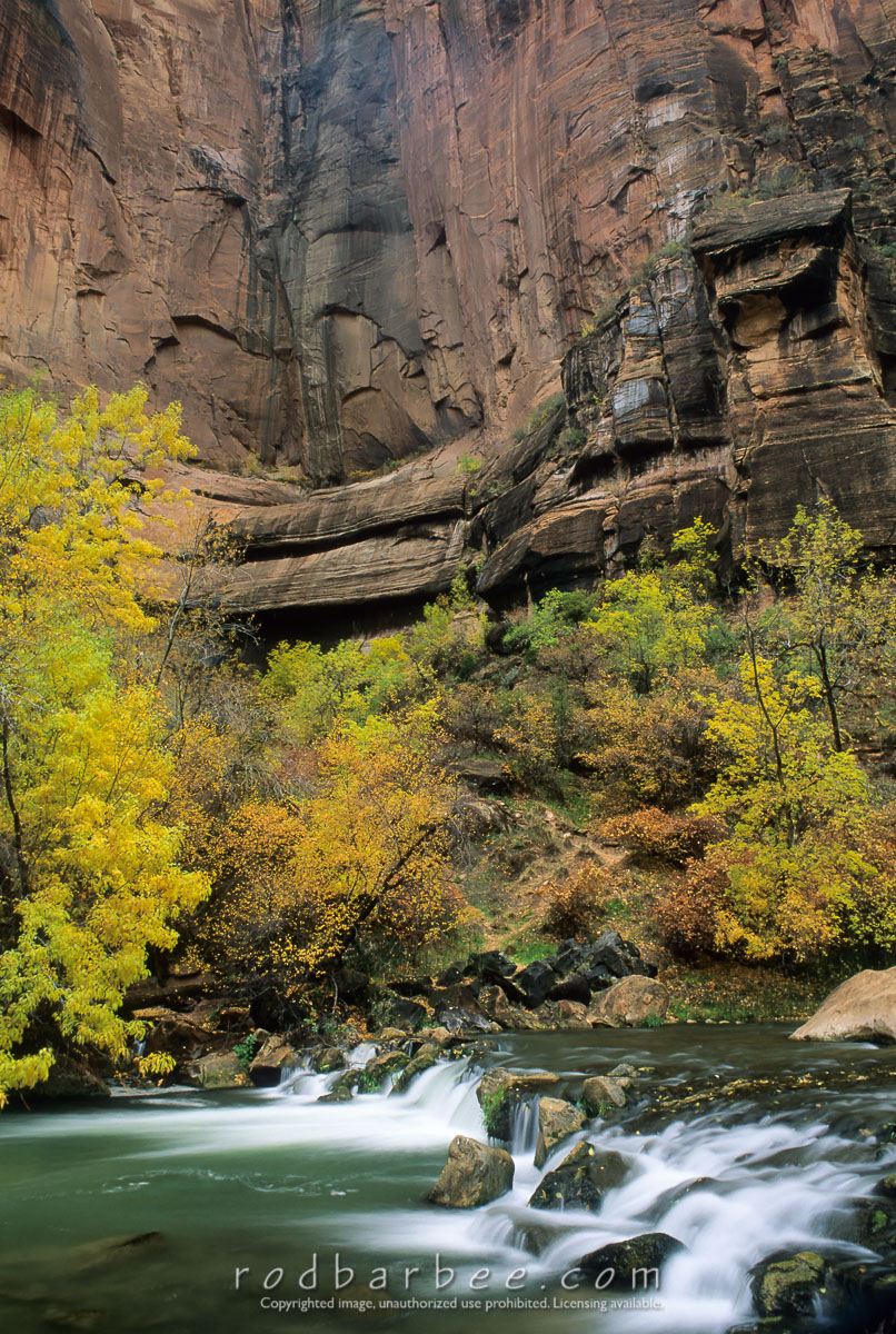 barbee_12051 |  Virgin River, fall color, and read rock in the Temple of Sinewava, Zion National Park, UT