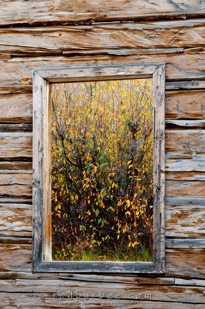 Barbee_101006_3_5619 |  Window of old abandon cabin on Gros Ventre road. Looking out at fall foliage.
