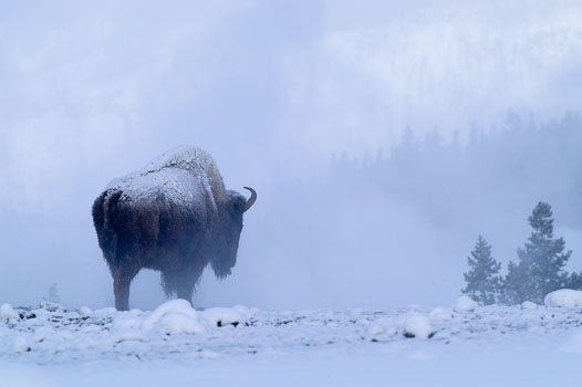 Grand Teton & Yellowstone