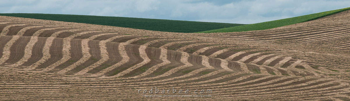 Barbee_140626_3_5115 |  Striped hay field along Hwy 272 between Colfax and Palouse.