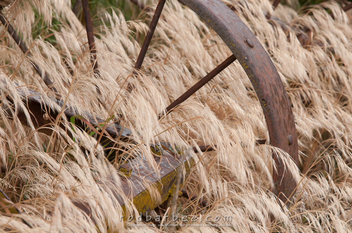 Barbee_140627_3_5277 |  Rusted wheel of farm equipment in dried grass