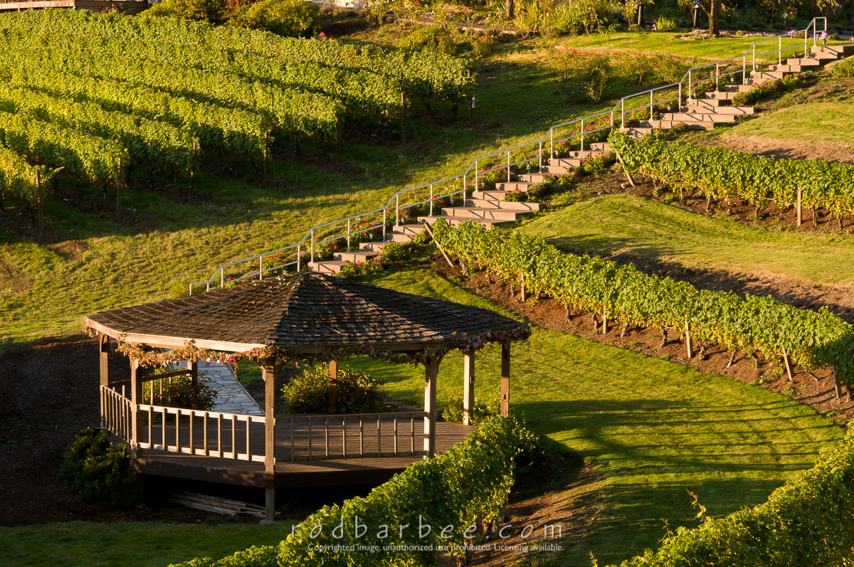 Barbee_101020_3_6085 |  Elk Cove Vineyards gazebo