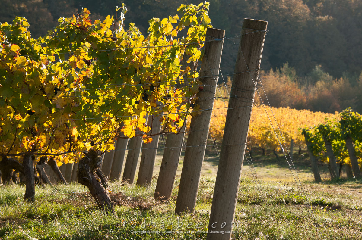 Barbee_131019_3_3420 |  Vineyard posts. Elk Cove Vineyards