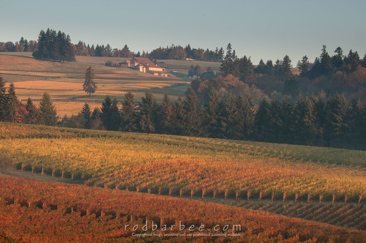 Barbee_131020_3_3499 |  View from Sokol Blosser Winery at sunrise.