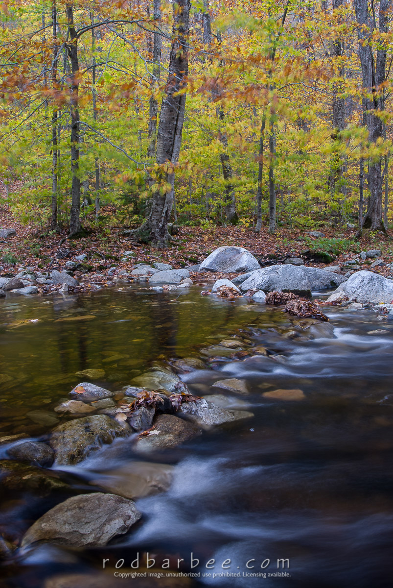 Barbee_071014_2_1394 |  Big Branch Creek and forest in autumn