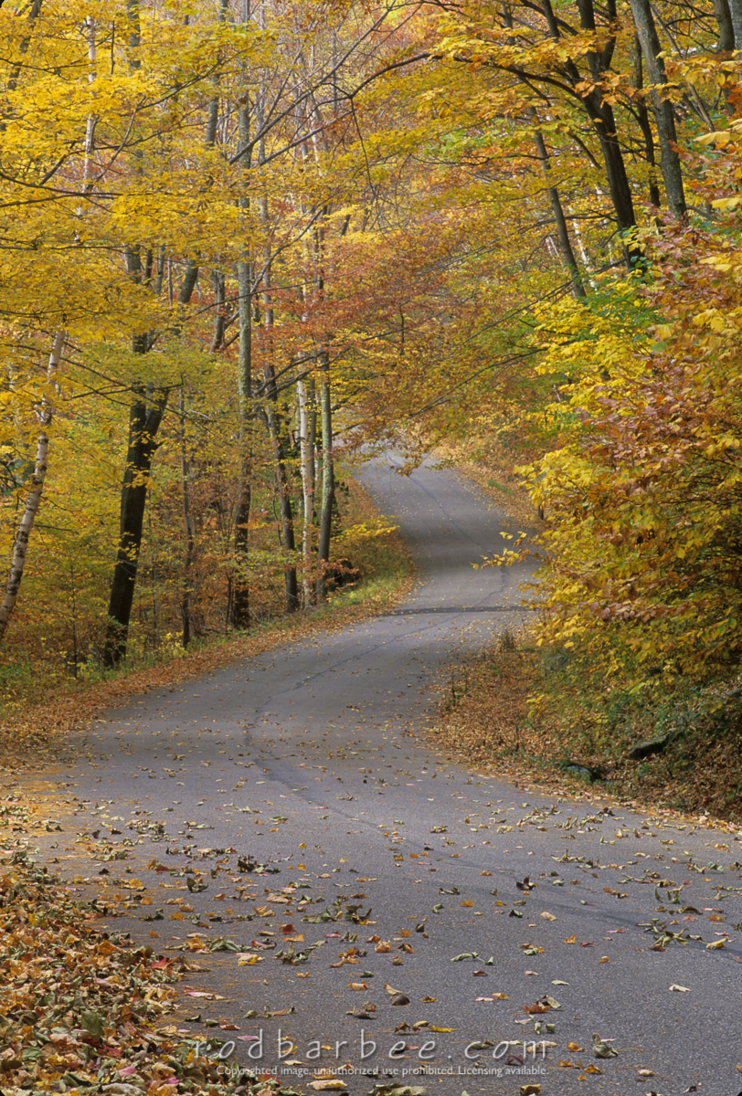 barbee_11972 |  Winding road and fall color