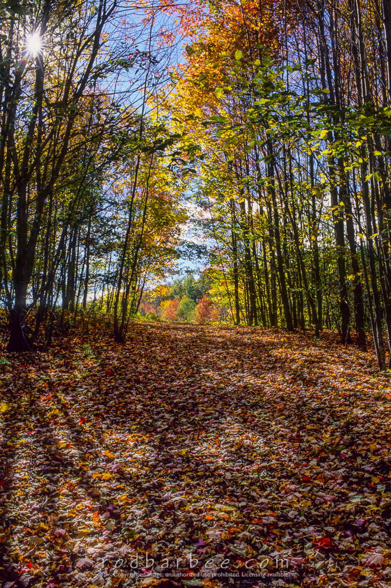 barbee_13278 |  Sunlight streaming through forest path in autumn.